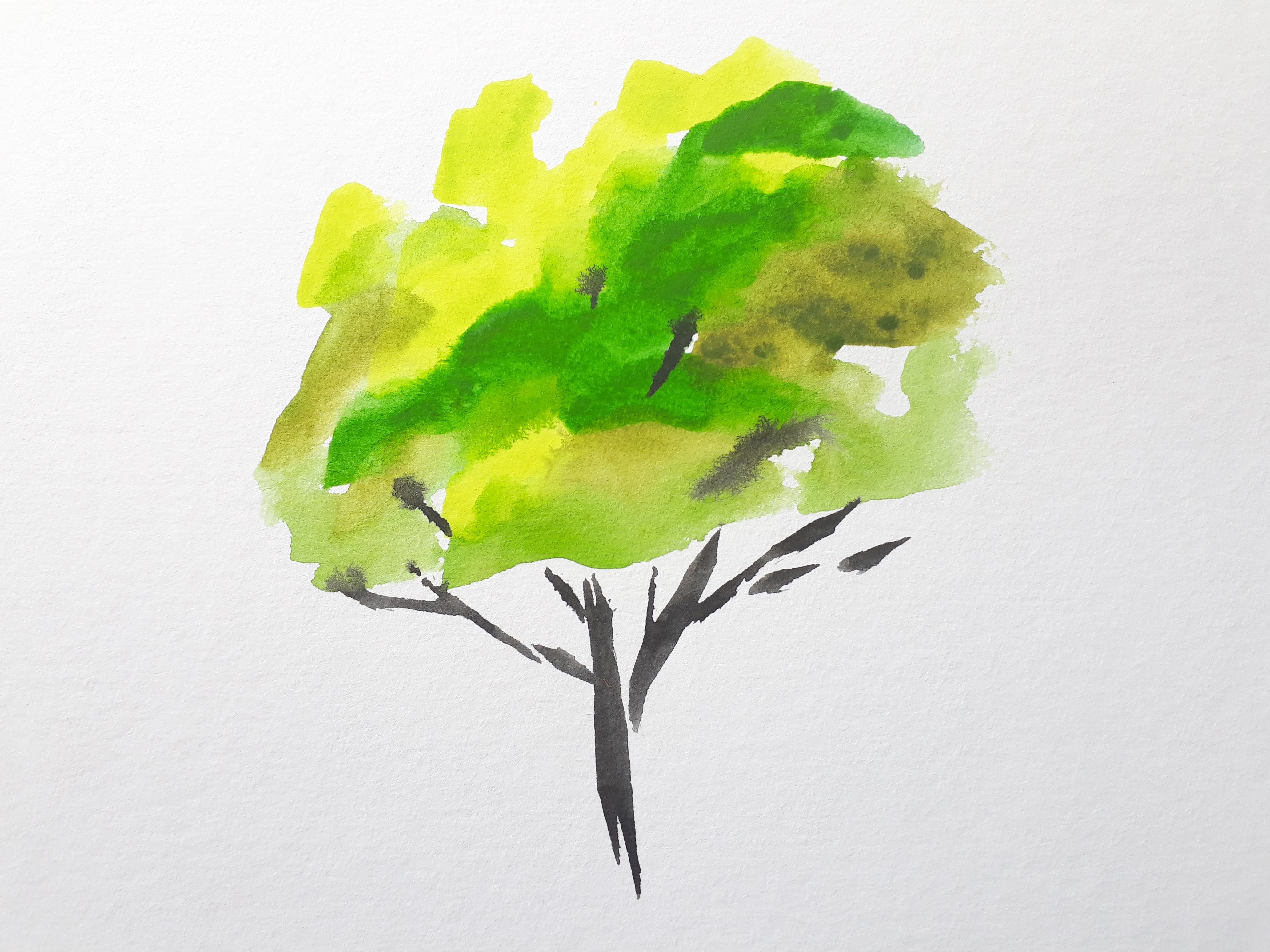 A lightly painted small watercolour tree in lemon, olive green and grass green